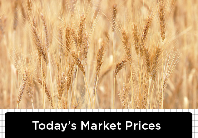 TodaysMarketPrice